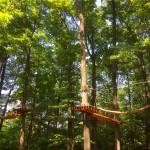Treetop Trekking&Zipline12
