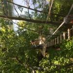 Treetop Trekking&Zipline15